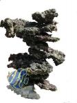 Riffsäulen aus lebendem Riffgestein